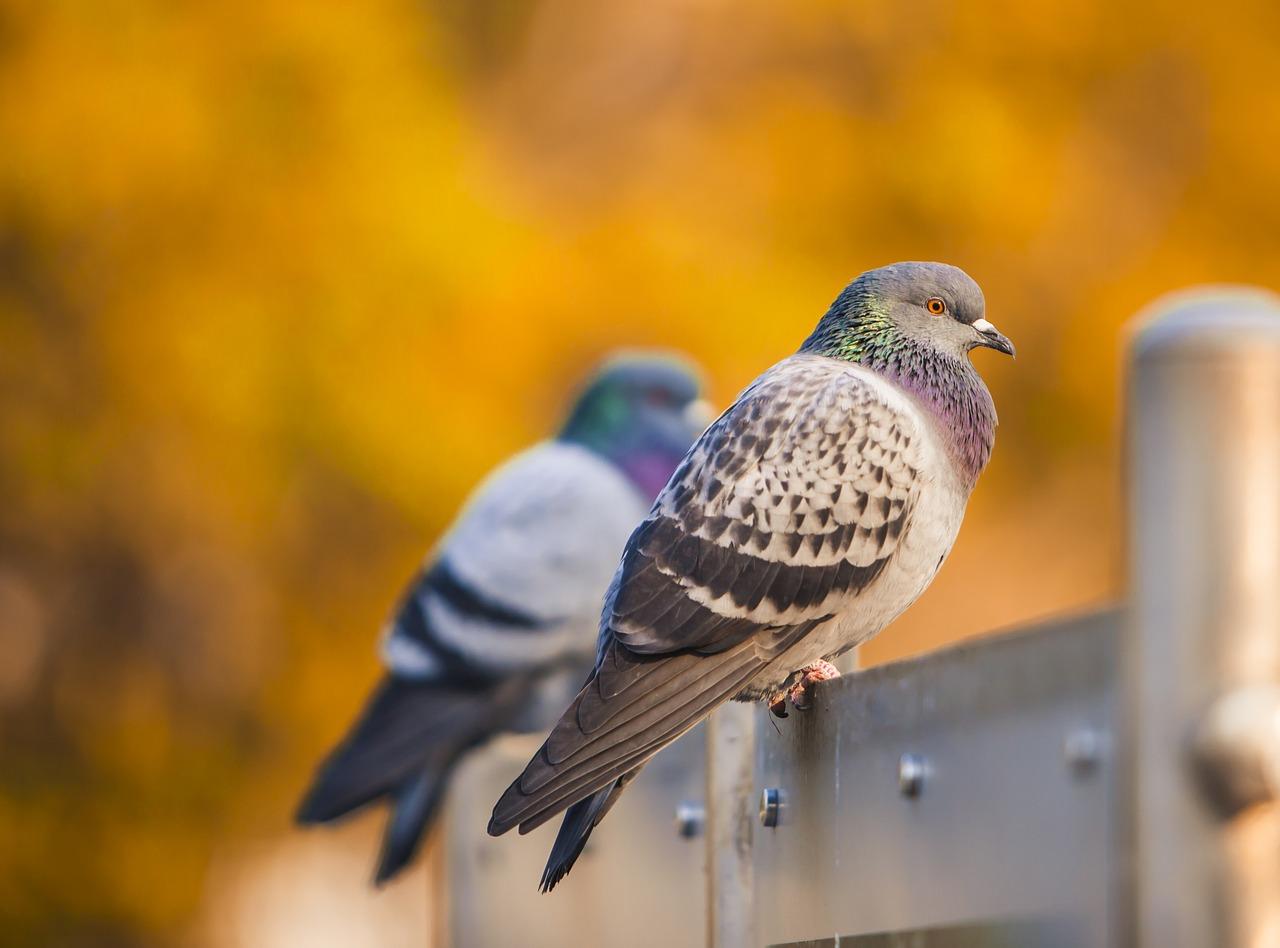 Odstraszacze ptaków - sposób na pozbycie się ptactwa z ogrodu i balkonu